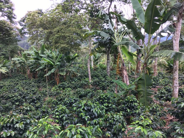 salento coffee farm