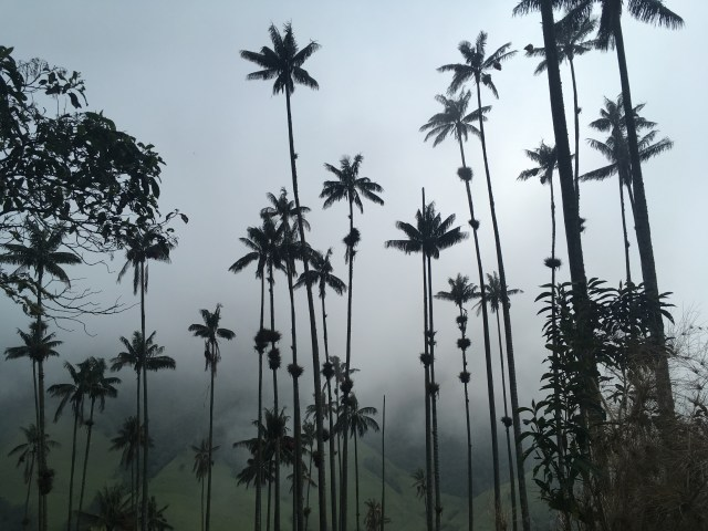 salento colombia palm trees