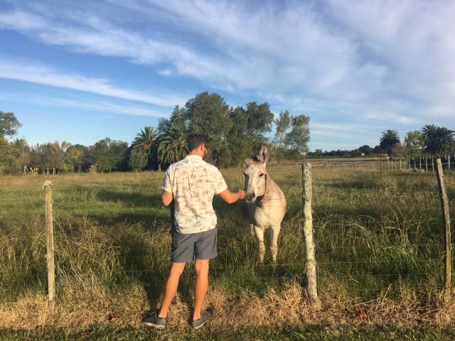 donkey uruguay