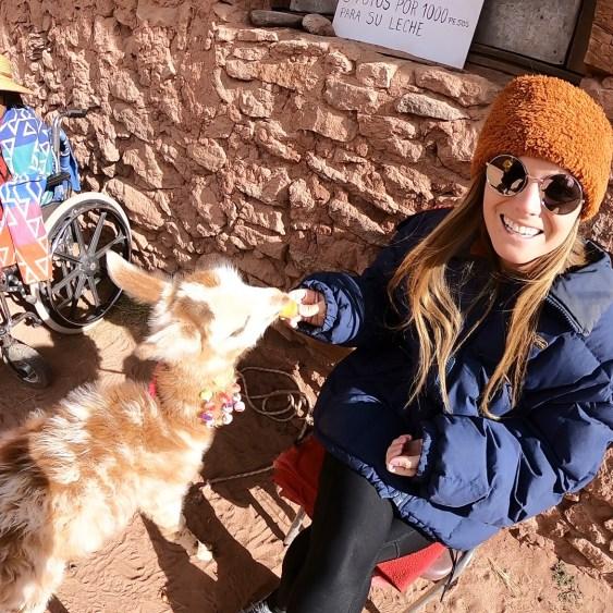 Rachel and baby llama chile