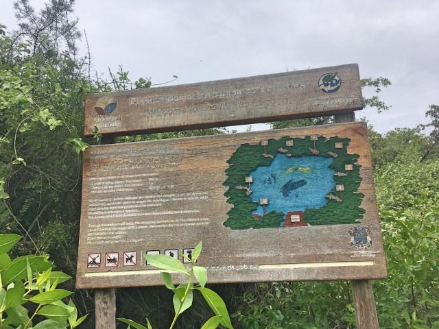 las ninfas laguana