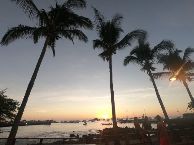palm trees san cristobal