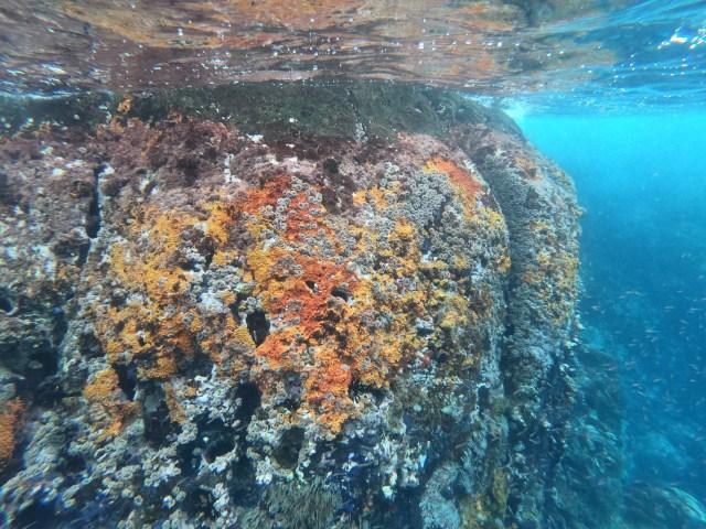 reef at kicker rock