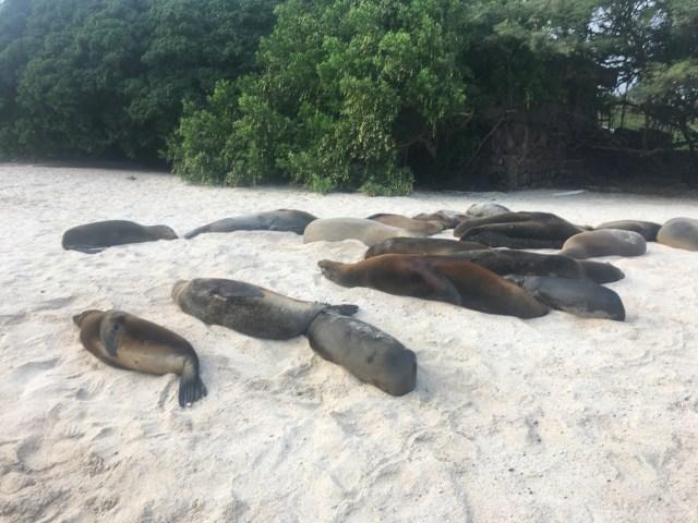 sea lions on sand