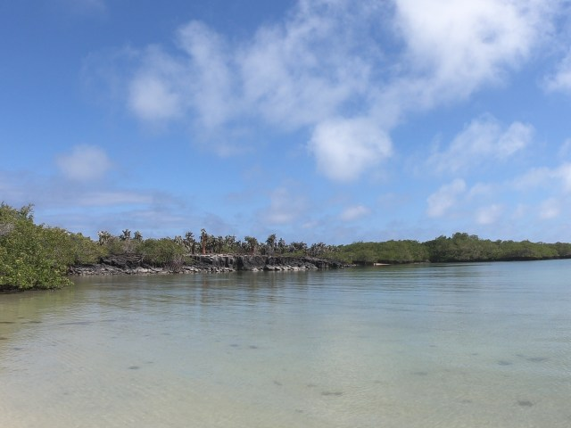 tortuga bay in galapagos
