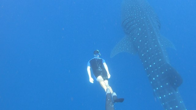 Swimming with a whale shark in Mecxico