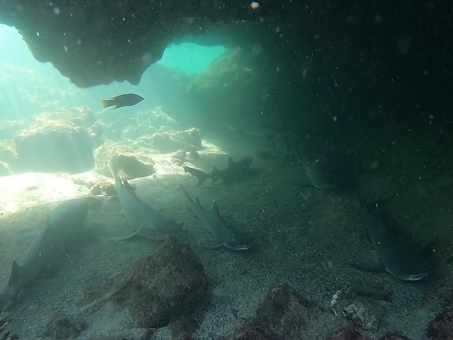 sharks in galapagos