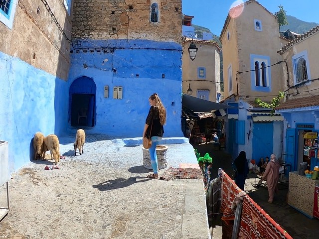 chefchaouen sheep