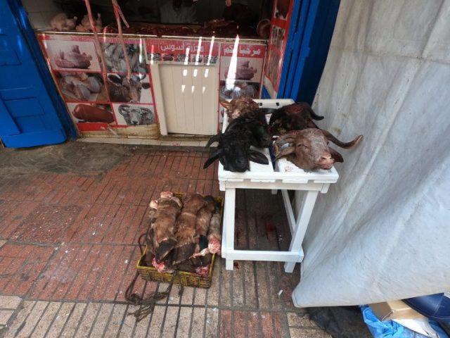 goat heads essaouira