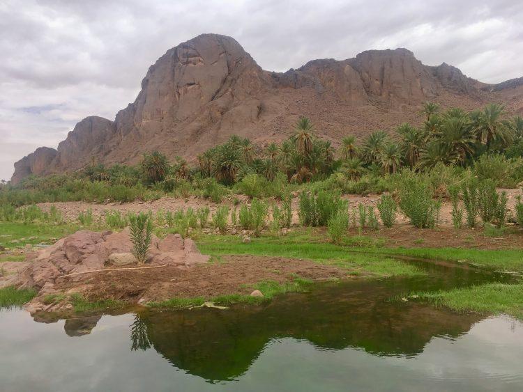 fintt oasis