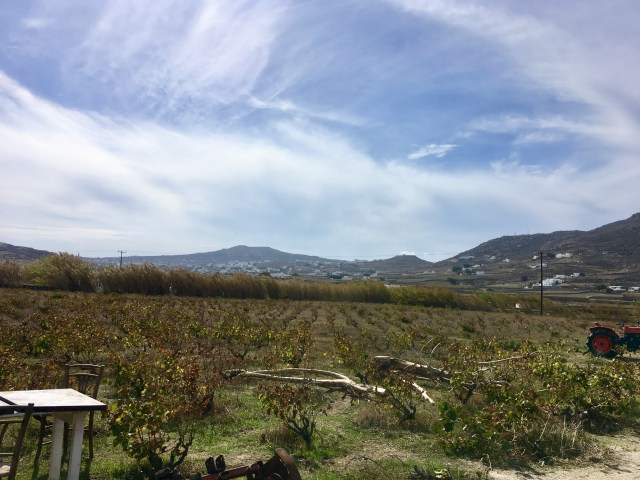 mykonos winery