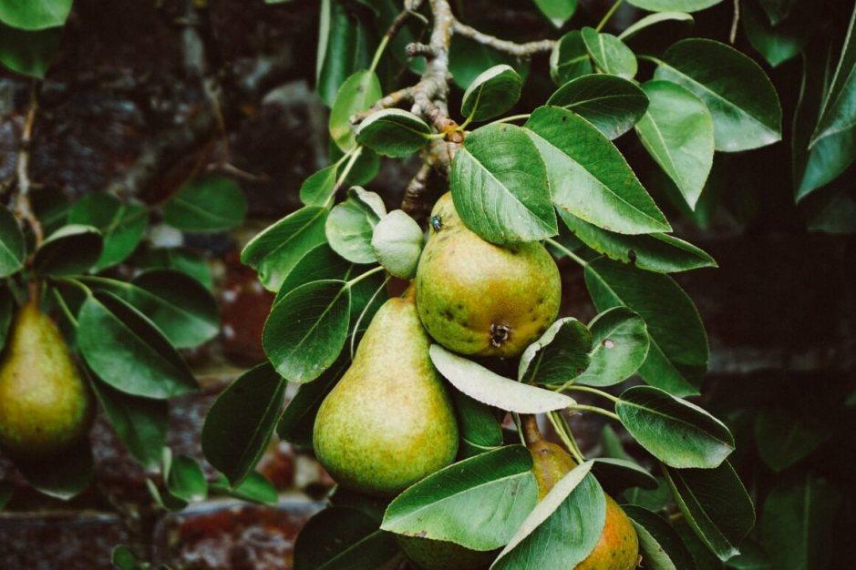 Create a Fruit Garden
