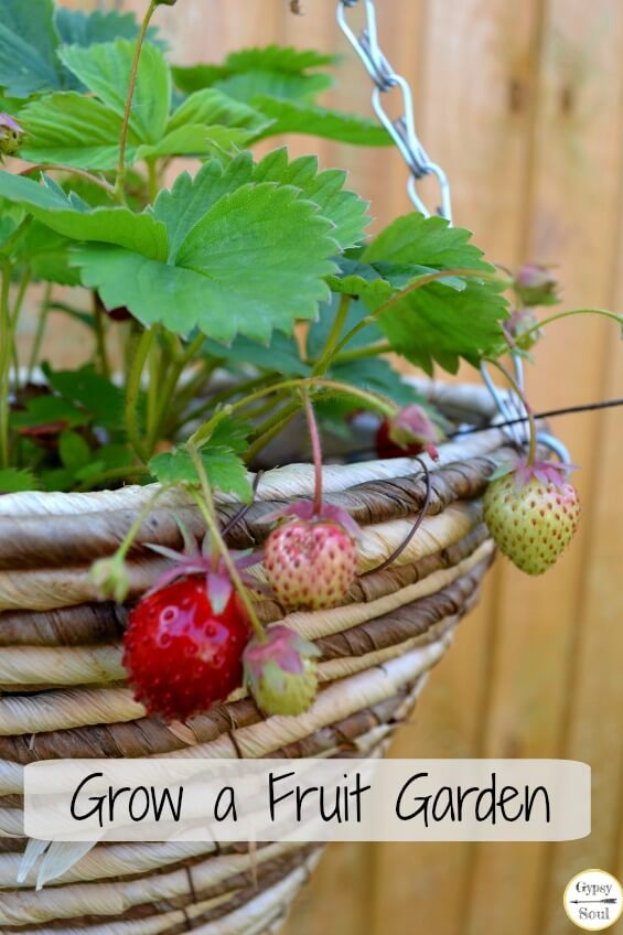 Grow your own fruit garden
