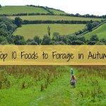 Top 10 Foods to Forage in Autumn