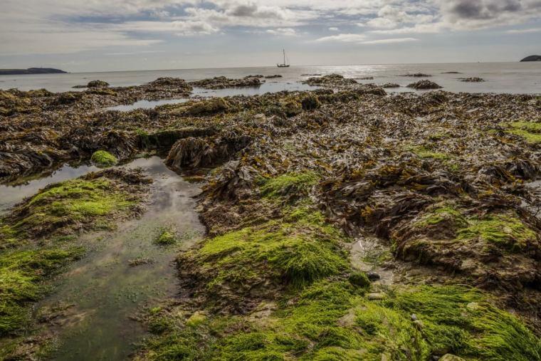 foraging seaweed