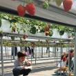 東大阪 de イチゴ狩り 開催しました