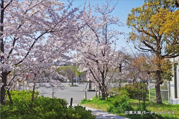 桜満開!春満開! 八戸ノ里公園