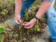Despite A Ban, Arkansas Farmers Are Still Spraying Controversial Weedkiller