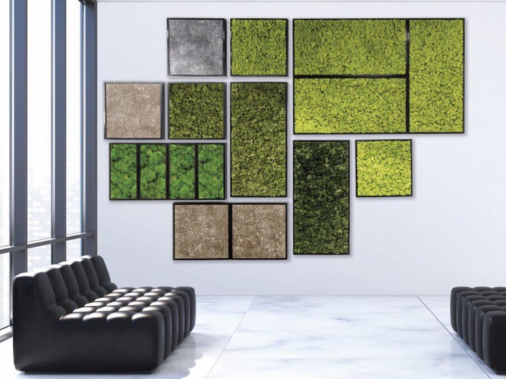 Mooswand, Haas Innengrün, Verschiedene Rahmen mit unterschiedlichem Moos im Büro
