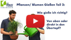 Gießen Teil 2 - Haas Innengrün
