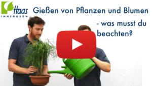 Gießen von Pflanzen