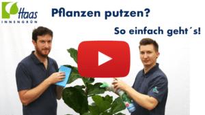 Putzen von Pflanzen und Blumen