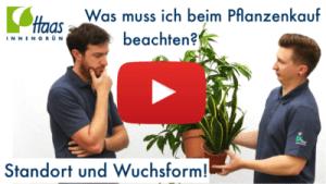 Standort für Pflanzen