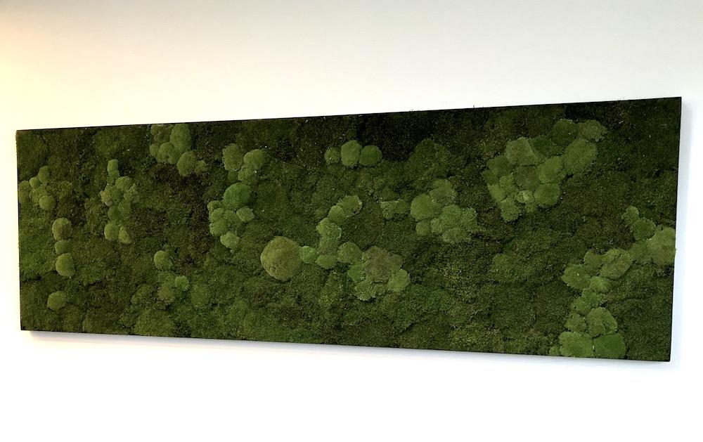 Moosbild, Mooswand mit Rahmen - Haas Innengrün