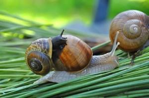 Pen & Hutch Boxes for Snail Farming