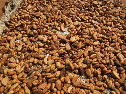 Export Business Nigeria