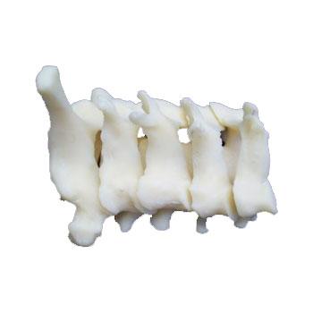 ZJY240015G-Cervical_Vertebra