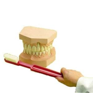 ZKH750P-Teeth_Giant_Toothbrush