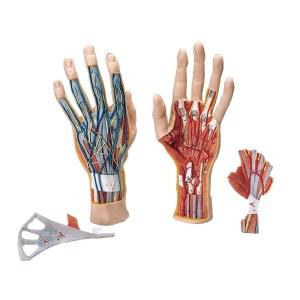 ZKJ251H-Hand_3_Parts