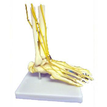 ZKJ692N-Neuro_Foot
