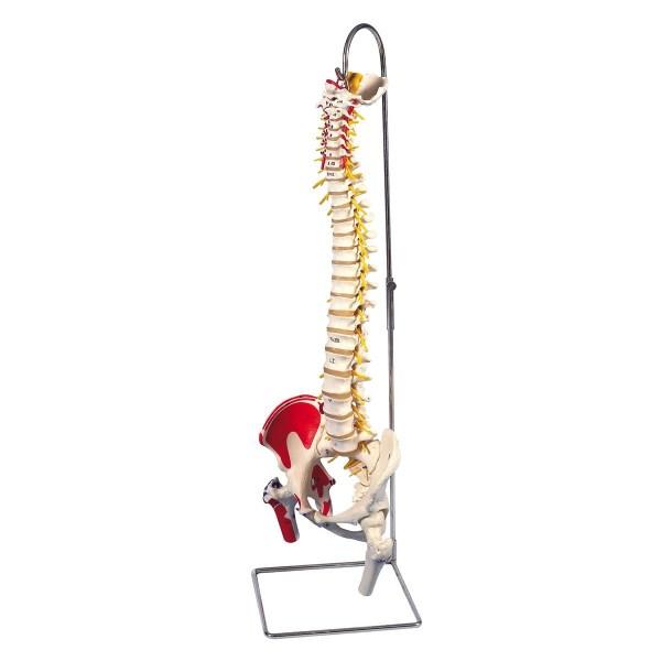 ZJZ130T-Flexible_Spine