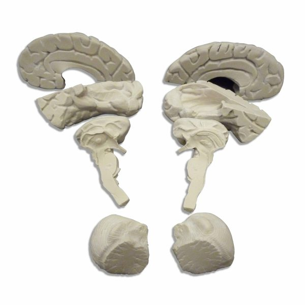 zkh185h-Soft Brain