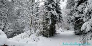 Winterlandschaft Goldsteig
