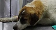 Gemlik'te yaralanan can dost Nilüfer'de sağlığına kavuştu