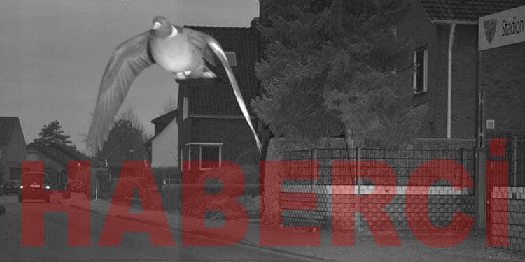 Hızlı güvercin radara yakalandı