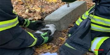 Kafası betona sıkışan kediyi itfaiye kurtardı