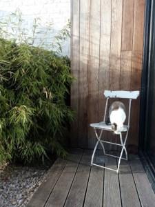 Home siting / colocation à Mons