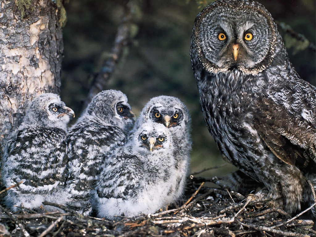 Image Result For Owl And Babies