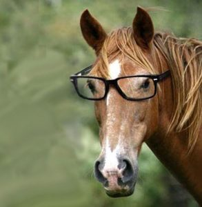 Researchers Study Near Farsightedness In Horses Habitat For Horses