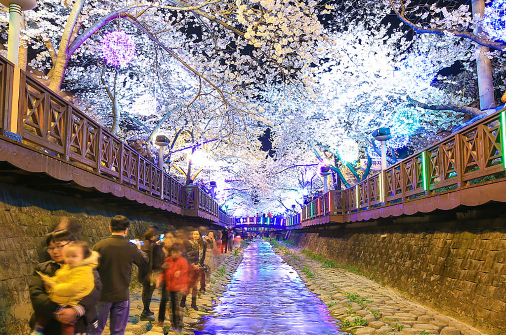 2020 Jinhae Gunhangje Festival likey start on March 27