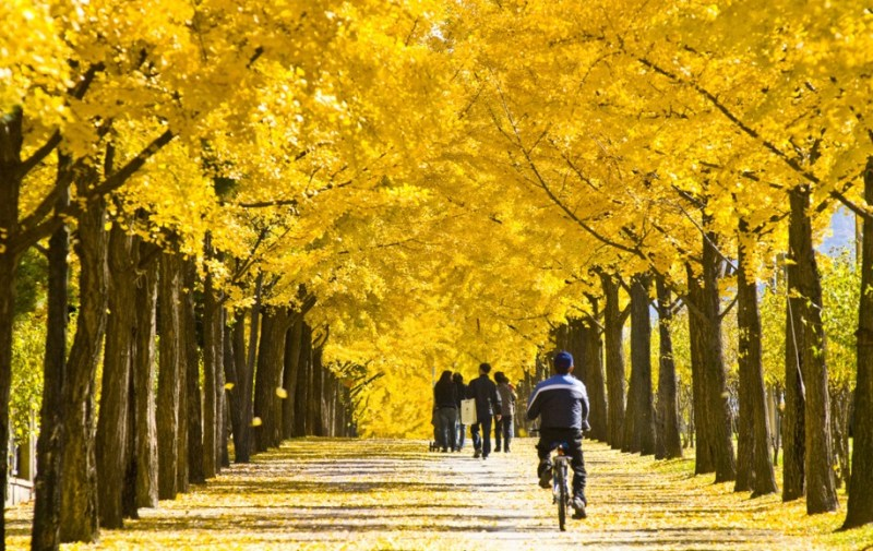5 Awesome Tourist Spots Good to visit in Autumn of Korea