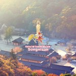 Korea-Fall-Season-Tour-SONGNISAN tour