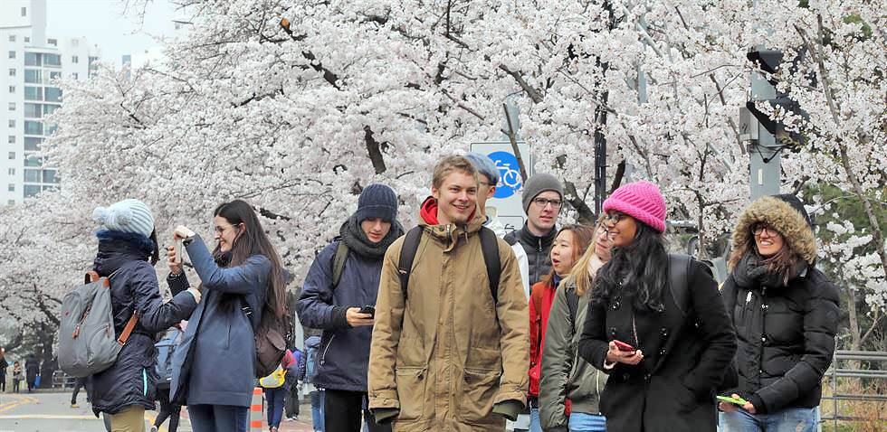 Cold Cherry Blossom festival day