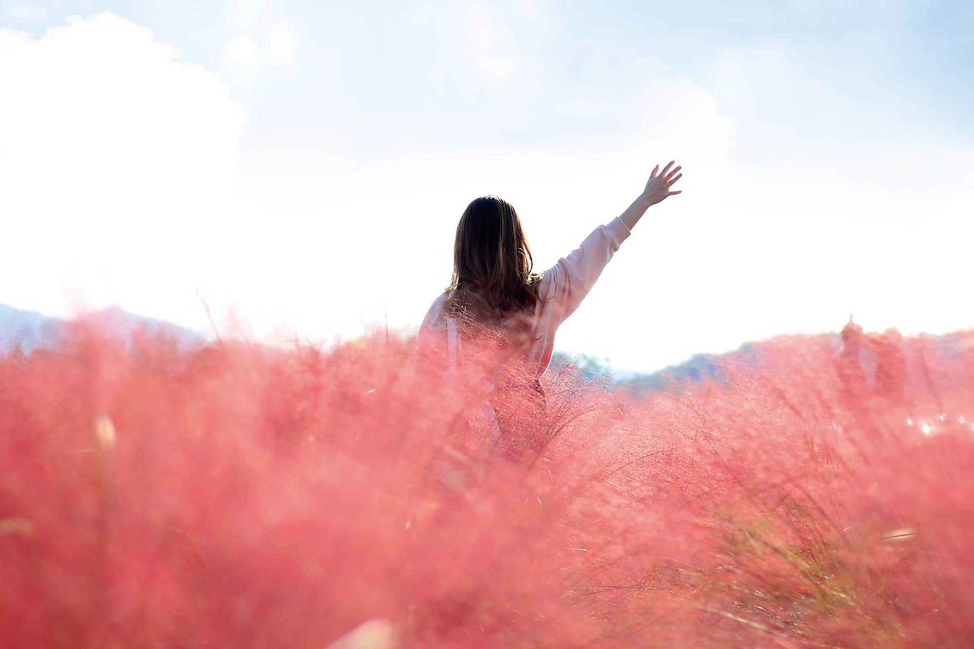 Pink-Muhly-Grass-in-Full-Bloom-at-Jamwon-Hangang-Park
