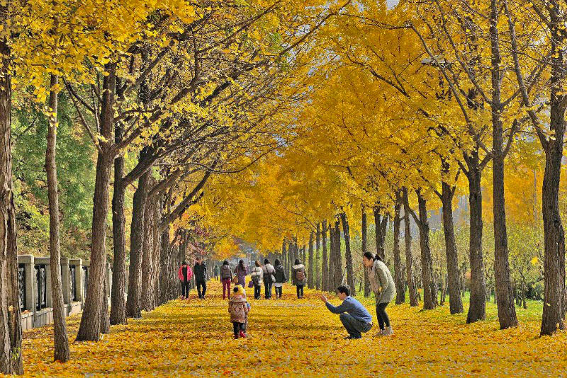 Best places chosen by Seoul City to enjoy Autumn in Seoul!