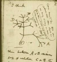 """""""Árbol"""" esquemático de Darwin en su propio cuaderno manuscrito."""